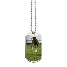 funny_colt Dog Tags