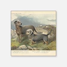 "Terriers antique print Square Sticker 3"" x 3"""