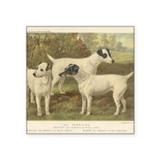 "Fox Terriers antique print Square Sticker 3"" x 3"""
