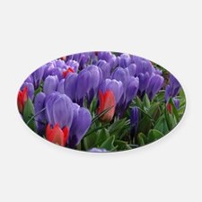 Purple  Red Tulips at Keukenhof Ga Oval Car Magnet