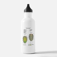 t-shirt_trilobite Water Bottle