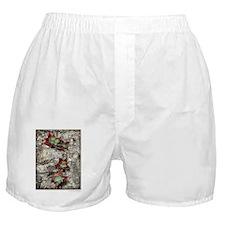 9x12framedprint_Fertile St copy Boxer Shorts