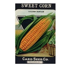 Yellow Corn antique seed  Postcards (Package of 8)