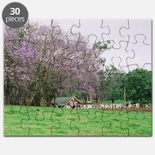 note jacaranda upcountry Puzzle