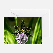 Zygopetalum-flower-H1-8588 Greeting Card