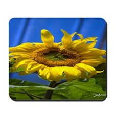 sunflower1-26-12-08-4428 Mousepad