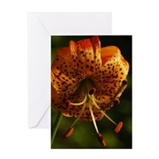 LILYPILLOW Greeting Card