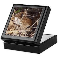 Hidden Fawn Keepsake Box
