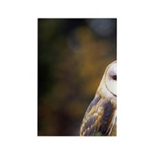 A barn owl on a fence post lookin Rectangle Magnet