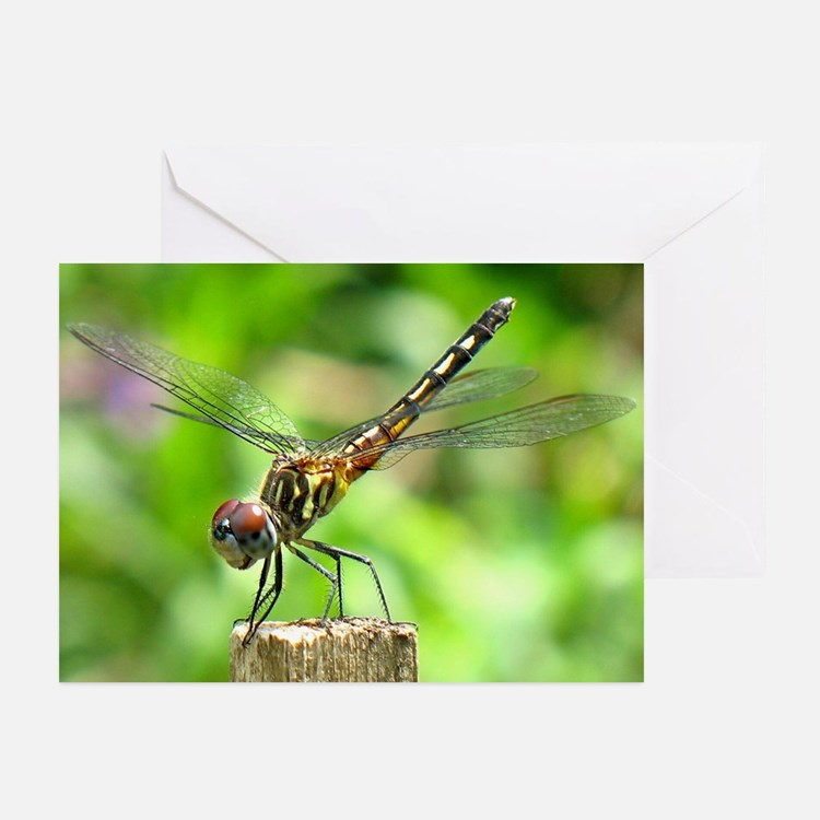 Dragonfly Dreams Greeting Cards (Pk of 10)