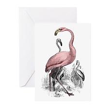 Pink Flamingo  Greeting Cards (Pk of 10)
