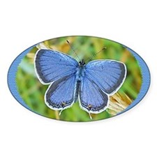 Eastern Tailed Blue Butterfly Photo Decal