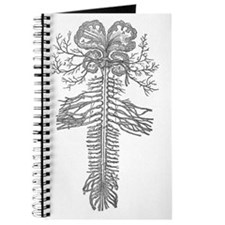 ramifications of nerves Journal