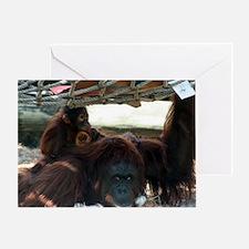 Orangutans Greeting Card