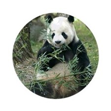 Panda Eating Ornament (Round)
