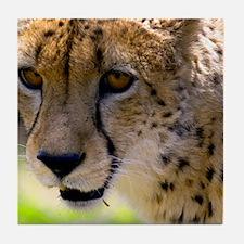 (12) Cheetah 9120 Tile Coaster