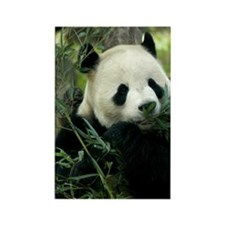 Panda Face Eating Rectangle Magnet