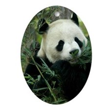 Panda Face Eating Oval Ornament