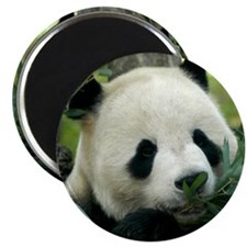 Panda Face Eating Magnet