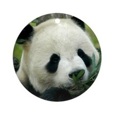 Panda Face Eating Ornament (Round)