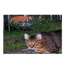 Alley Cat Postcards (Package of 8)