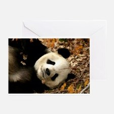 Tai Shan resting in leaves Greeting Cards (Package