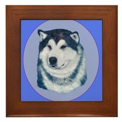 Alaskan Malamute Show dog Framed Tile