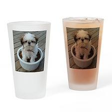Shih Tzu Puppy in Bowl Drinking Glass
