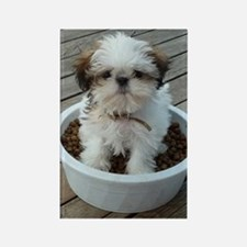 Shih Tzu Puppy in Bowl Rectangle Magnet