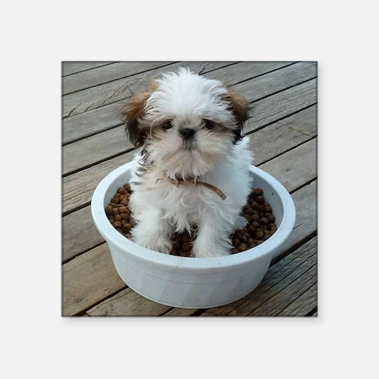 """Shih Tzu Puppy in Bowl Square Sticker 3"""" x 3"""""""