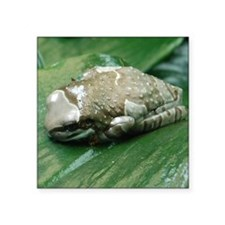"2-milk frog Square Sticker 3"" x 3"""