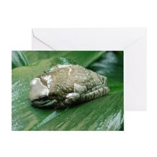 2-milk frog Greeting Card