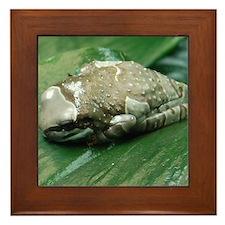 2-milk frog Framed Tile