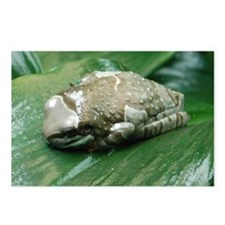 2-milk frog Postcards (Package of 8)