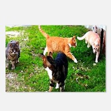 Feral Cats Postcards (Package of 8)