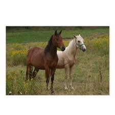 Andalusians in field Postcards (Package of 8)