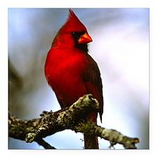 "Cardinal Square Car Magnet 3"" x 3"""