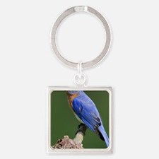Eastern Bluebird Square Keychain