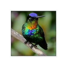 "Fiery-throated Hummingbird Square Sticker 3"" x 3"""