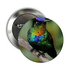 """Fiery-throated Hummingbird 2.25"""" Button"""