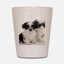 Two Shih Tzu Puppies Shot Glass