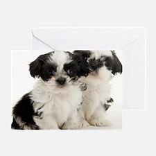 Two Shih Tzu Puppies Greeting Card