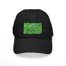chipmunk 3 Baseball Hat