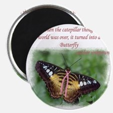 Butterfly BC Ribbon B Magnet