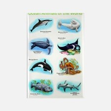 Ocean Animals Rectangle Magnet