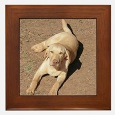 Yellow Lab 1900 x 1600 Framed Tile