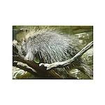 porcupine 2 Rectangle Magnet (10 pack)