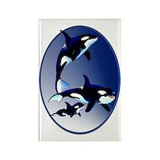 Killer Whale Family Oval Trans Rectangle Magnet
