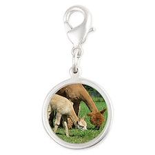 Momma  Me Alpaca  Cria Silver Round Charm