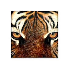 "Tiger Eyes1000x841 Square Sticker 3"" x 3"""